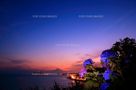 富士山と紫陽花 FYI00198726