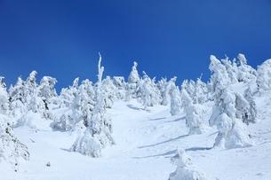 蔵王の樹氷 FYI00198750