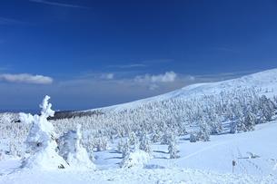 蔵王の樹氷 FYI00198758