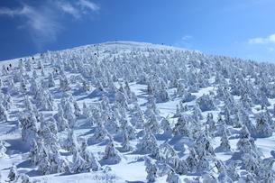 蔵王の樹氷 FYI00198767