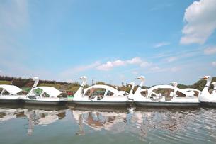 スワンボート FYI00200043