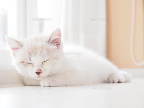 仔猫-おやすみ FYI00202038