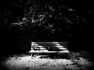 木洩れ日のベンチ FYI00202177