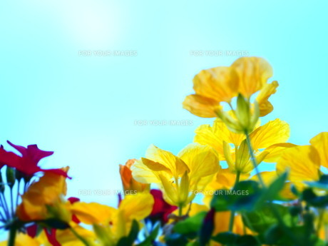 Yellow&SKY FYI00203091