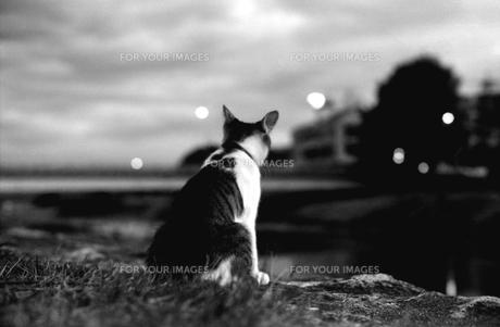 夜景のネコ FYI00206917