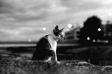 夜景のネコ FYI00206919