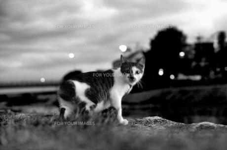 夜景のネコ FYI00206922