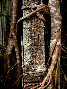 ガジュマルに侵食される遺跡。ベンメリア FYI00212975