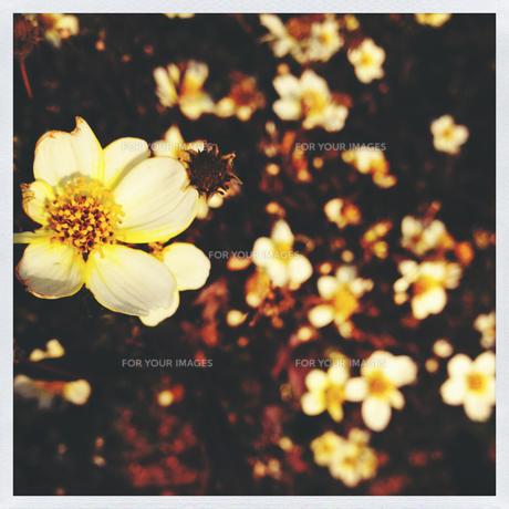春の訪れ FYI00213954