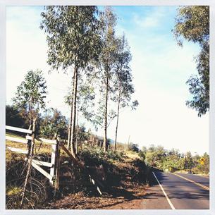 マウイの田舎道 FYI00213961