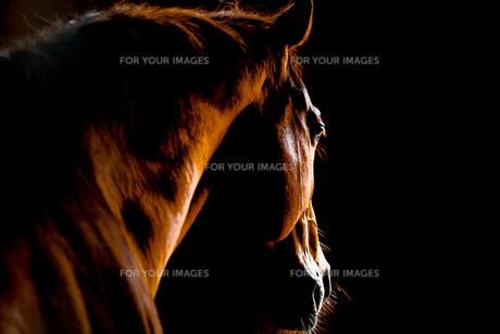 馬のバックショット FYI00213984