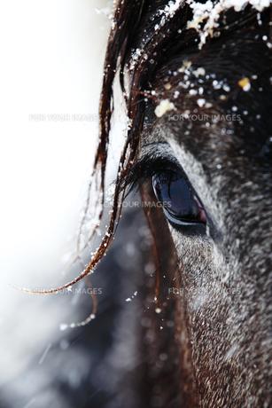 北国の馬 FYI00213990