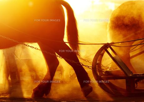 ばんえい競馬の朝 FYI00213994