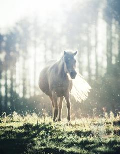 光の中の馬 FYI00214039