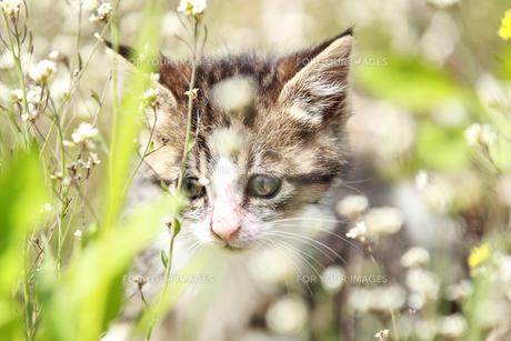 子猫 FYI00214112