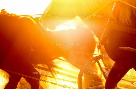 早朝の馬 FYI00214161