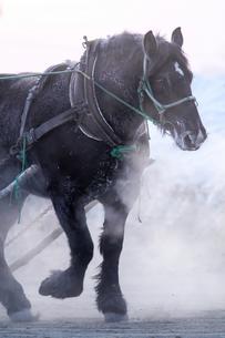冬の馬 FYI00214163