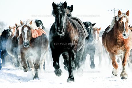 走る馬 FYI00214166