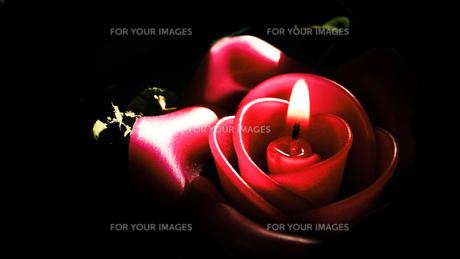 バラの蝋燭 FYI00214199