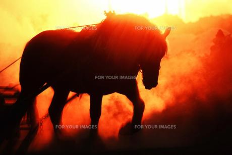 朝焼けと馬 FYI00214203