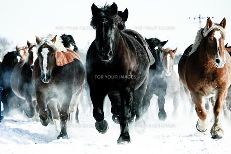 馬の集団 FYI00214204