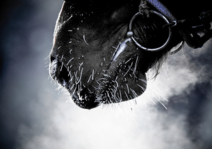 馬の息 FYI00214221