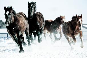 疾走する馬 FYI00214303