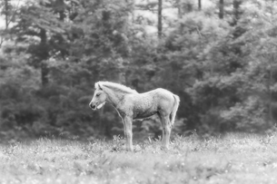 モノクロの白馬 FYI00214392