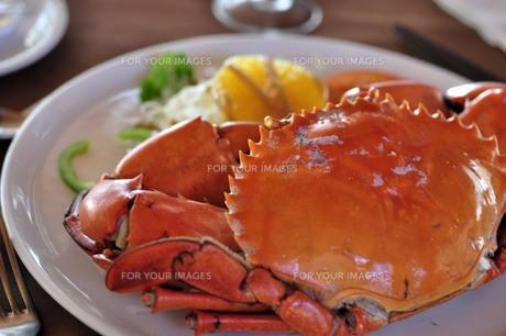 マングローブ蟹 FYI00214840