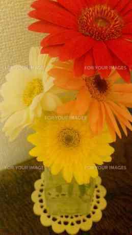 たくさんの花 FYI00219454