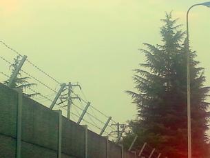 大きいモミの木と高い壁 FYI00219457