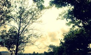 静かな朝の木立 FYI00219482