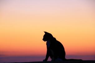 夕日に佇むネコ FYI00222032