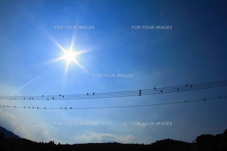太陽と小鳥の楽譜 FYI00222037