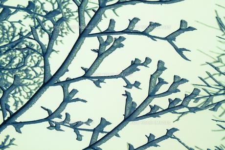 樹氷 FYI00222063