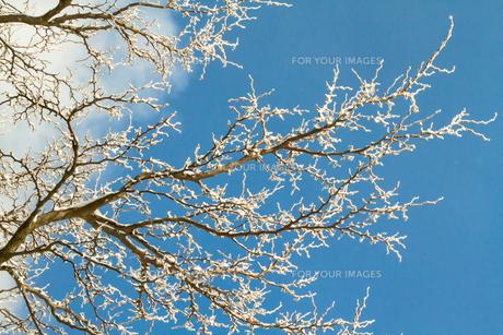 樹氷 FYI00222071