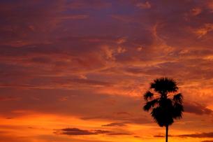 夕焼けのヤシの木 FYI00222816