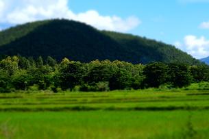 山と田んぼと木 FYI00222824