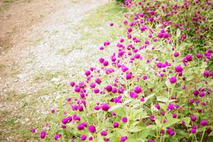 small garden FYI00222844