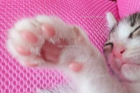 子猫の肉球 FYI00225653