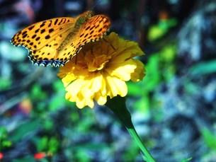 花と蝶 FYI00225673