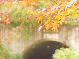 熊本県菊池市 紅葉 FYI00225678