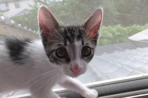 子猫のカメラ目線 FYI00225690