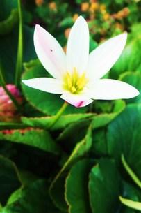 名も知らない白い花 FYI00225691