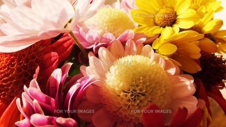 鮮やかな花色 FYI00225695