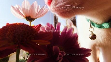 お花いい匂い〜 FYI00225701