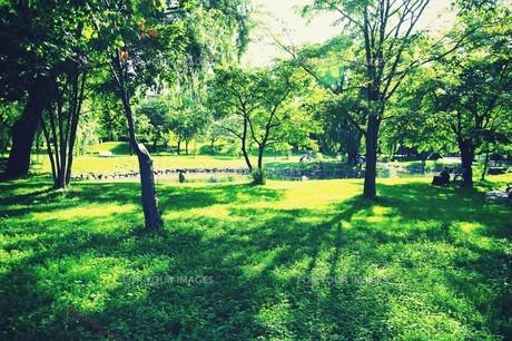 新緑の中島公園 FYI00226148