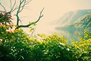 十和田湖畔の紅葉 FYI00226173
