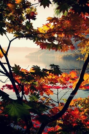 十和田湖畔の紅葉 FYI00226174