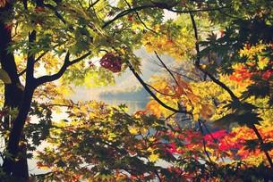 紅葉と湖 FYI00226178